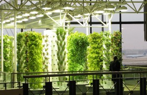 Chicago - O'Hare Airport - Aeroponic Garden - Kräuter- und Gemüseanbau 7 - (C) Chicago Department of Aviation